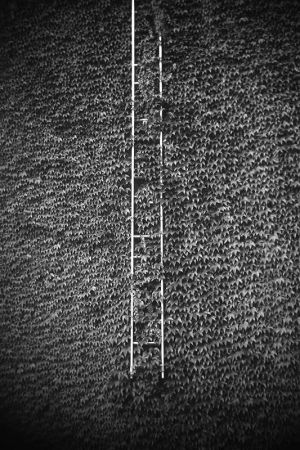 Ladder and Leaves