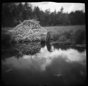 Beaver Abode